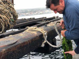 ムール貝の養殖